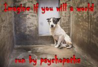 Dogs - Psychopaths imagine