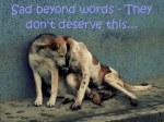 Dogs - Sad beyond words - They don't deserve this