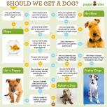 Dogs - Should we get a dog