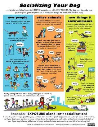 Dogs - Socializing your dog