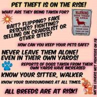 Dogs - Theft of pets on the rise