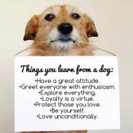 Dogs - Things you learn from a dog