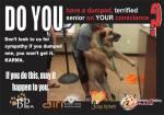 Homeless pets - Abandon do not dump as shelters kill seniors