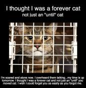 Homeless pets - Abandoned cat a forever