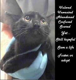 Homeless pets - Abandoned cat yet still hopeful