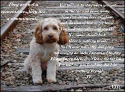 Homeless pets - Abandoned dog on railroad