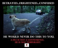 Homeless pets - Abandoned dog on road