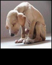 Homeless pets - Abandoned dog
