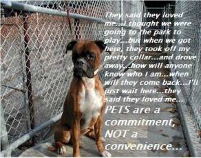 Homeless pets - Abandoned dogs