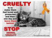 Homeless pets - Abandoned is cruelty