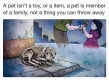 Homeless pets - Abandoned pet is not a toy