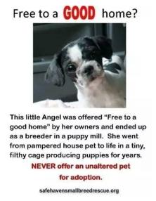 Homeless pets - Abandoned pets given away free
