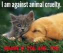 Homeless pets - Abuse against cat and dog