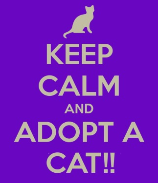 Homeless pets - Adopt cat keep calm
