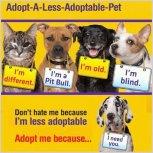 Homeless pets - Adopt special needs