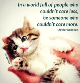 Homeless pets - Be someone who couldn't care more