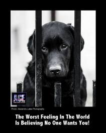 Homeless pets - Black dog worst feeling in the world