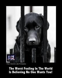 Homeless pets - Black dog worst feeling in the world