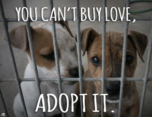 Homeless pets - Can't buy love but can adopt it