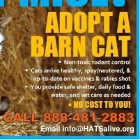 Homeless pets - Cats adopt a barn cat