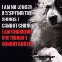 Homeless pets - Changing the things we cannot accept