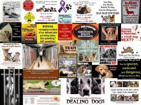 Homeless pets - Composite