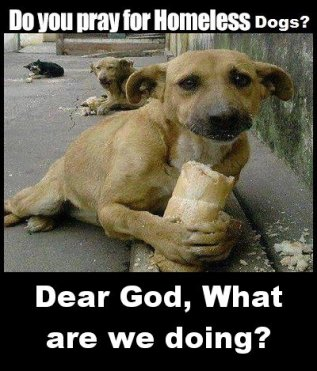 Homeless pets - Dog hungry what are we doing