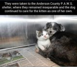 Homeless pets - Dog takes care of cat