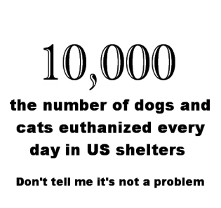 Homeless pets - Euthanised daily in US shelters