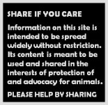 Homeless pets - Facebook share if you care