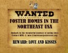 Homeless pets - Foster homes wanted in north east