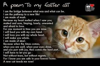 Homeless pets - Foster poem