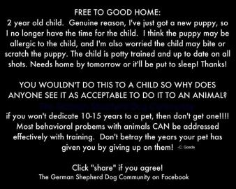 Homeless pets - Free to good home child