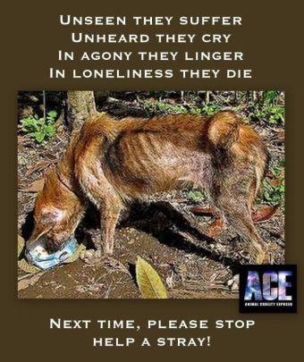 Homeless pets - Help a stray