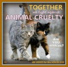 Homeless pets - Help abuse together fight against animal cruelty