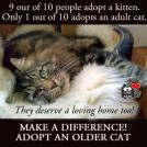 Homeless pets - Help adopt senior cat