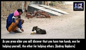 Homeless pets - Help as you grow older you will discover that you have two hands
