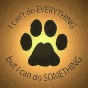 Homeless pets - Help can't do everything but can