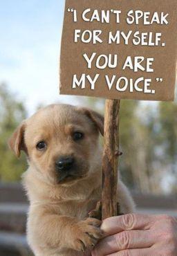 Homeless pets - Help can't speak