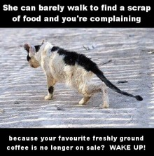 Homeless pets - Help cat can barely walk