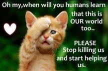 Homeless pets - Help cat help us
