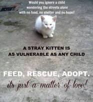 Homeless pets - Help feed rescue and adopt 2