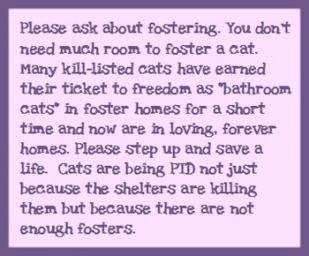 Homeless pets - Help foster BATHROOM