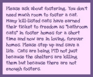 Homeless pets - Help foster BATHROOM