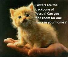 Homeless pets - Help foster find room for one more