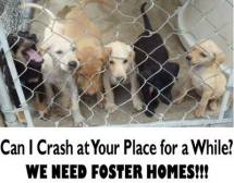 Homeless pets - Help foster homes can I crash at your place