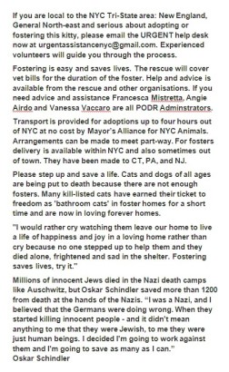 Homeless pets - Help foster NYC AC&C USE THIS