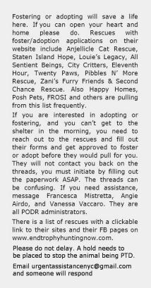 Homeless pets - Help foster rescue info PODR