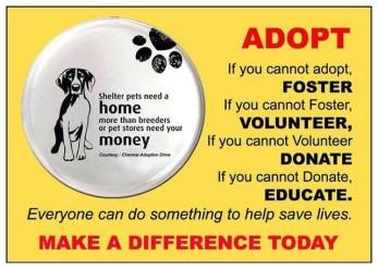 Homeless pets - Help foster volunteer donate educate