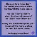 Homeless pets - Help foster